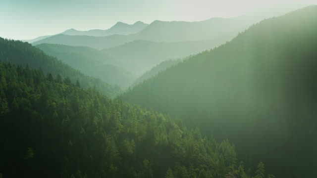 Sun Shining on Dense Forest in Klamath Mountains, Northern California - Aerial View