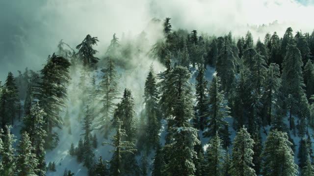 Soleil brillant sur les arbres de brume a couronnés - Drone Shot - Vidéo