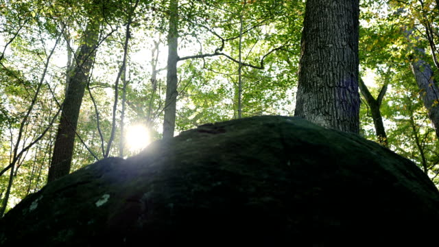 Sun shining over the top of  a rocky outcrop in the forest video