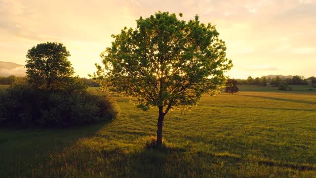 Sun Shining Through a Tree on a Meadow