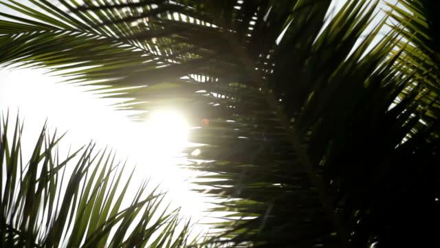 Sun shining through palm leaves