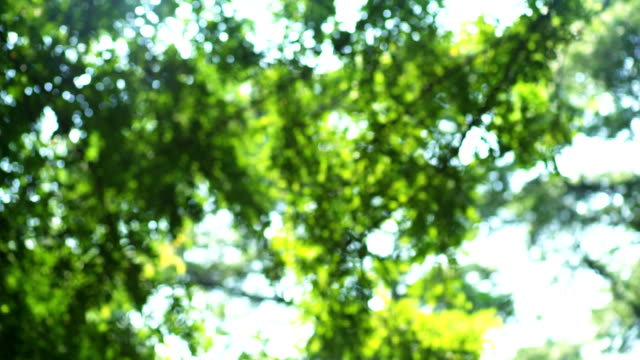 Sun Shining Through The Branches And Leaves video