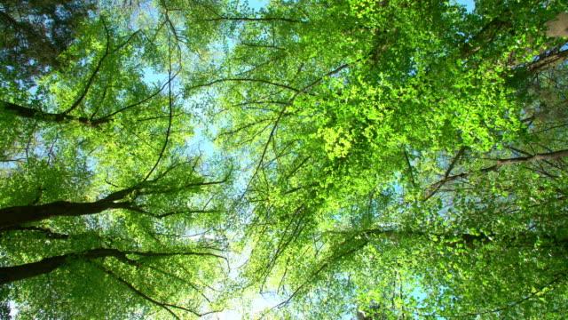 vidéos et rushes de le soleil brille à travers les treetops - vue en contre plongée verticale