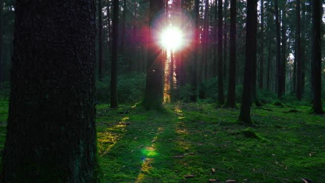 Sonne leuchtendes Trog Grünwald Kamerafahrt – Video