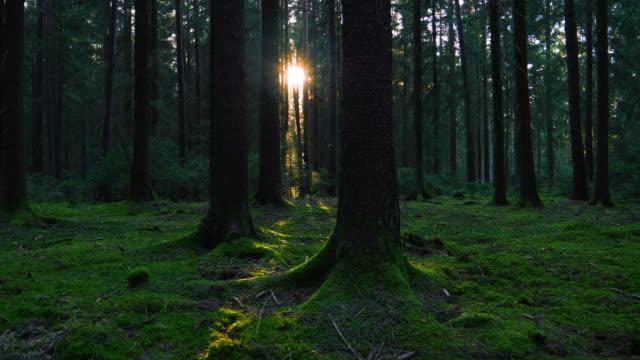 Sun Shining Trough Green Forest Tracking Shot