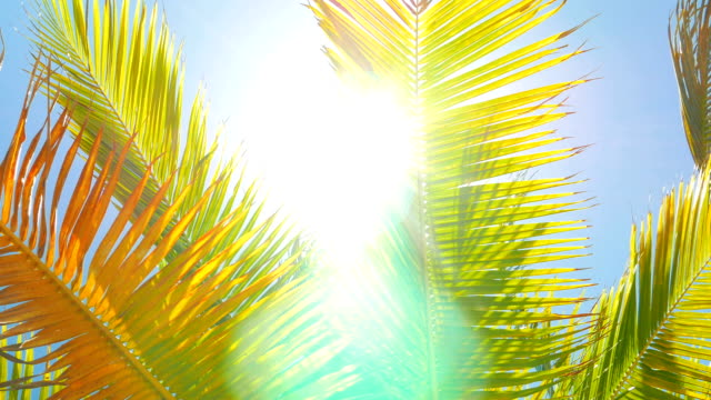 Sun Shinning into the Camera Through Palm Leafs video