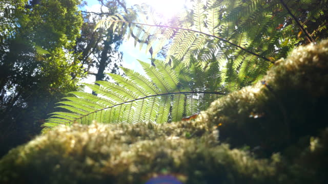 sun shrine through leaf - fronda video stock e b–roll