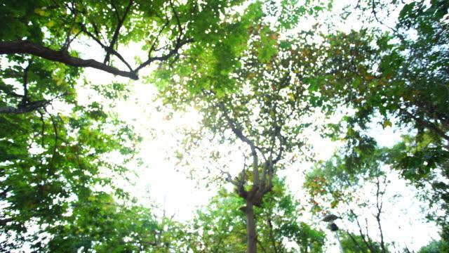 太陽から森 ビデオ