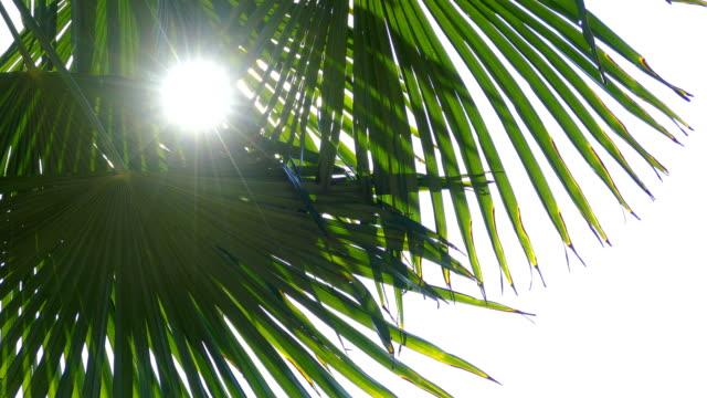 ヤシの木の木漏れ日の太陽 - ヤシの木点の映像素材/bロール