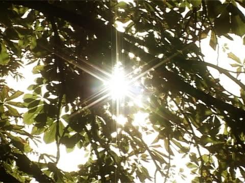 sole attraverso le foglie - parte della pianta video stock e b–roll