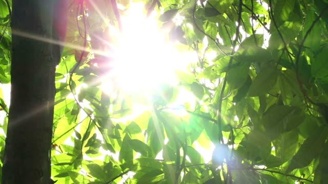 太陽、葉 - 木漏れ日点の映像素材/bロール