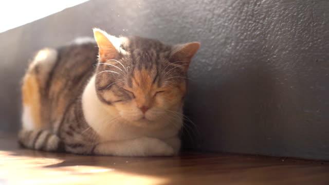 眠り猫の日光浴 - ふわふわ点の映像素材/bロール