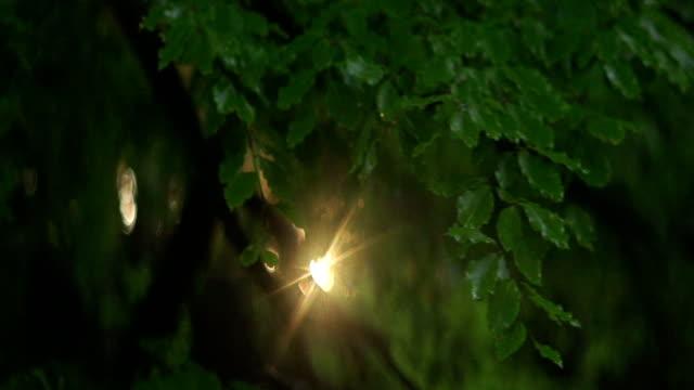 Sunbeam shining between beeches. Mountain forest – film