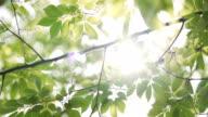 istock Sunbeams peaking through lush green leaves. 1158743130