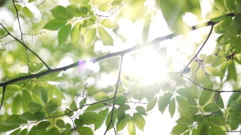 vídeos y material grabado en eventos de stock de rayos de sol que alcanzan su punto máximo a través de exuberantes hojas verdes. - sol