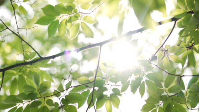 vídeos de stock e filmes b-roll de sunbeams peaking through lush green leaves. - leaf