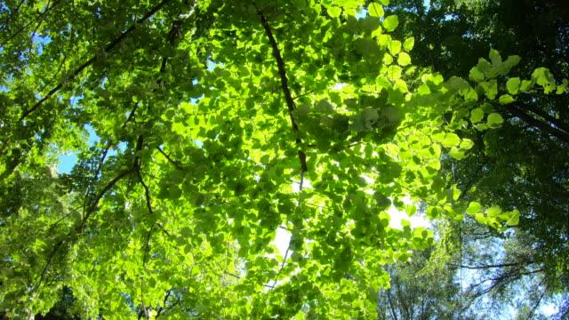 木の枝に緑豊かな新鮮な葉を通して輝く太陽光線 - 木漏れ日点の映像素材/bロール