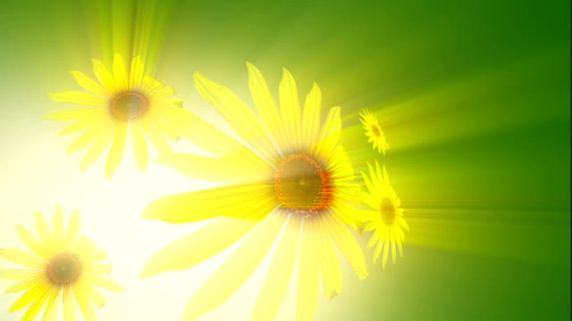 Sunflower Background video