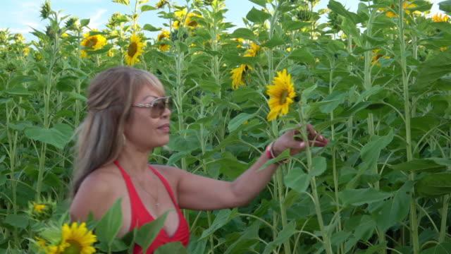 Sunflower Field Film Montage