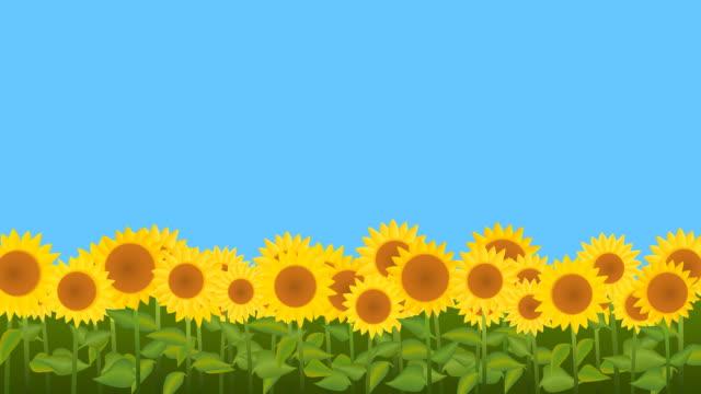 подсолнечник в поле  - sunflower стоковые видео и кадры b-roll