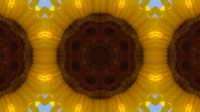 Sunflower Kaleidoscope video
