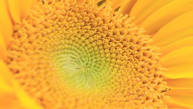sunflower - sunflower 個影片檔及 b 捲影像