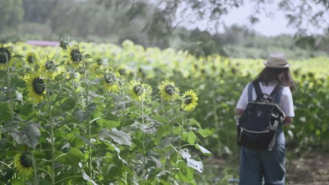 Sunflowers farm video
