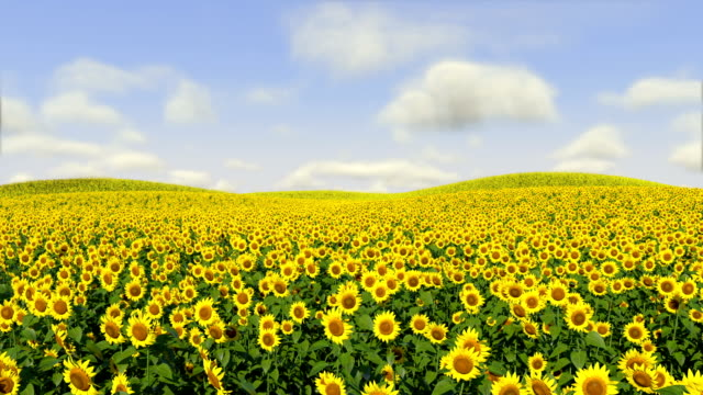 sunflowers following sun - sunflower 個影片檔及 b 捲影像