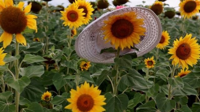 vídeos de stock, filmes e b-roll de girassóis no campo. belos campos com girassóis no verão. mulheres chapéu branco na cabeça de girassol. - flor temperada