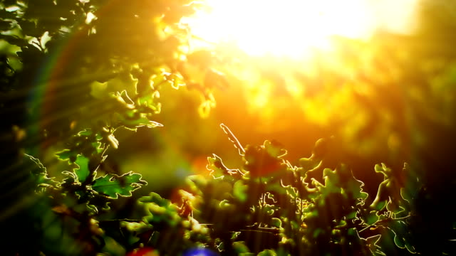 Sunlight and branches (loopable) video