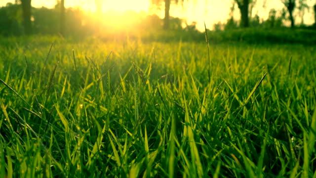 vídeos de stock, filmes e b-roll de luz solar e a grama - gramado terra cultivada