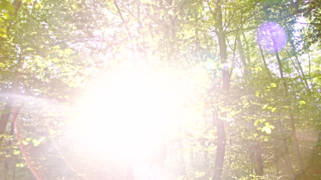 WS Sunlight Coming Through The Trees video