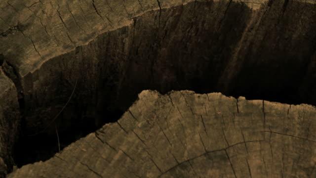 Sunlight Falling On Tree Stump video