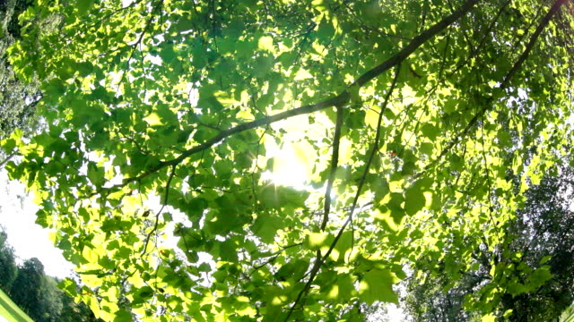 Sunlight flickering through branches and leaves on clear summer day