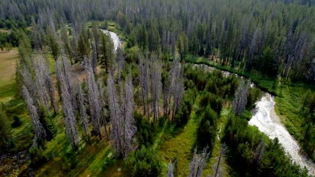 sunlight glistens off of a small stream as it leads through a forest wilderness - дикая местность стоковые видео и кадры b-roll