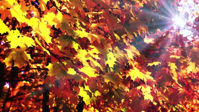Sunlight in autumn forest video