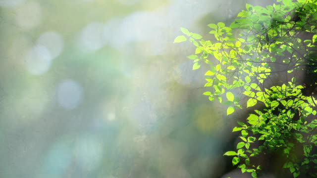 Sunlight In Green nature background video