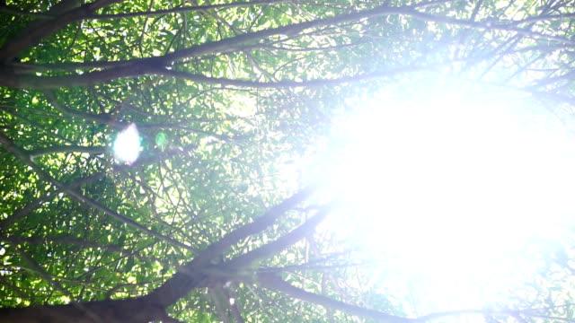 太陽の光を木の枝と葉 - 木漏れ日点の映像素材/bロール