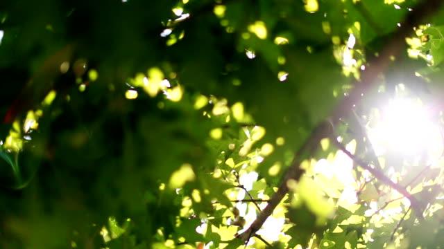 太陽の光が発表したレンズを通してグリーンツリーの葉 - 木漏れ日点の映像素材/bロール