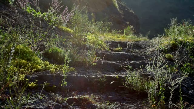 Sunlight on a stairs video
