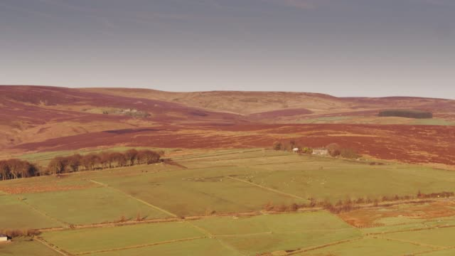 Sunlight on Moorland and Fields of Sheep - Drone Shot video