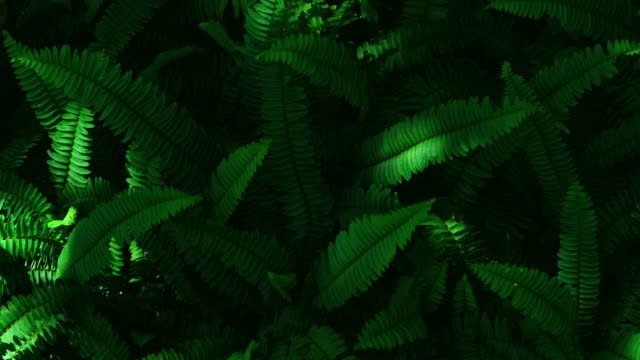 sunlight on the Fern leaf tropical greens.