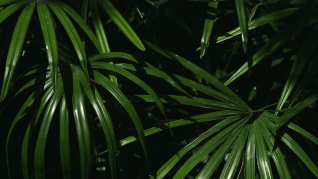 sunlight on the palm leaf tropical greens.