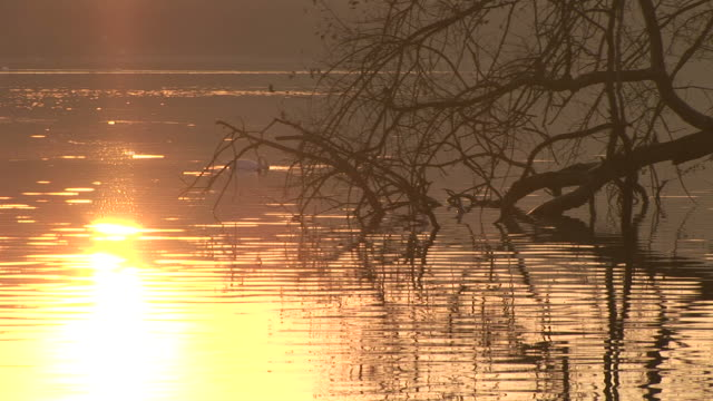 太陽の光の海 - 水鳥点の映像素材/bロール