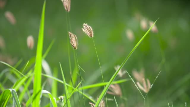 Sunlight seen through beautiful green grass