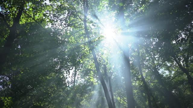 森の枝から見える日差し。 - ローアングル点の映像素材/bロール