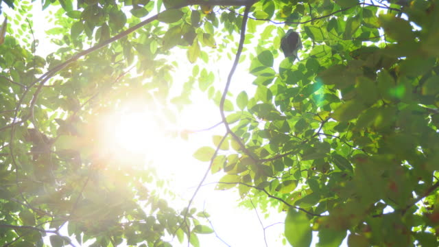 Sunlight seen through branches the leaves. 4K format video