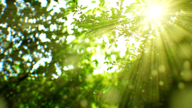 Sunlight seen through branches (loopable) Sunbeams seen through branches. Flying pollens. Shallow depth of field. summer background stock videos & royalty-free footage