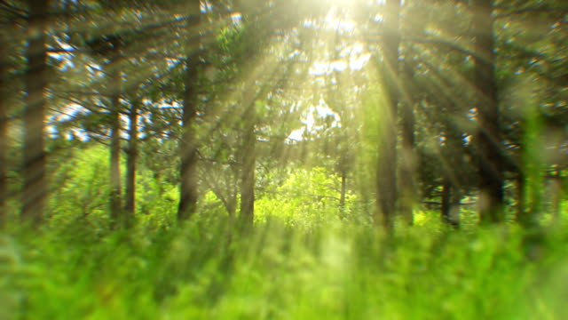 Sunlight seen through trees (loopable) video