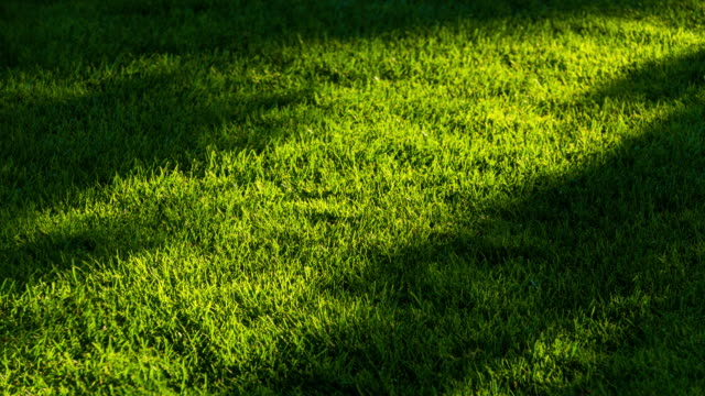sunlight shade motion on green grassland 4k dci - penombra video stock e b–roll